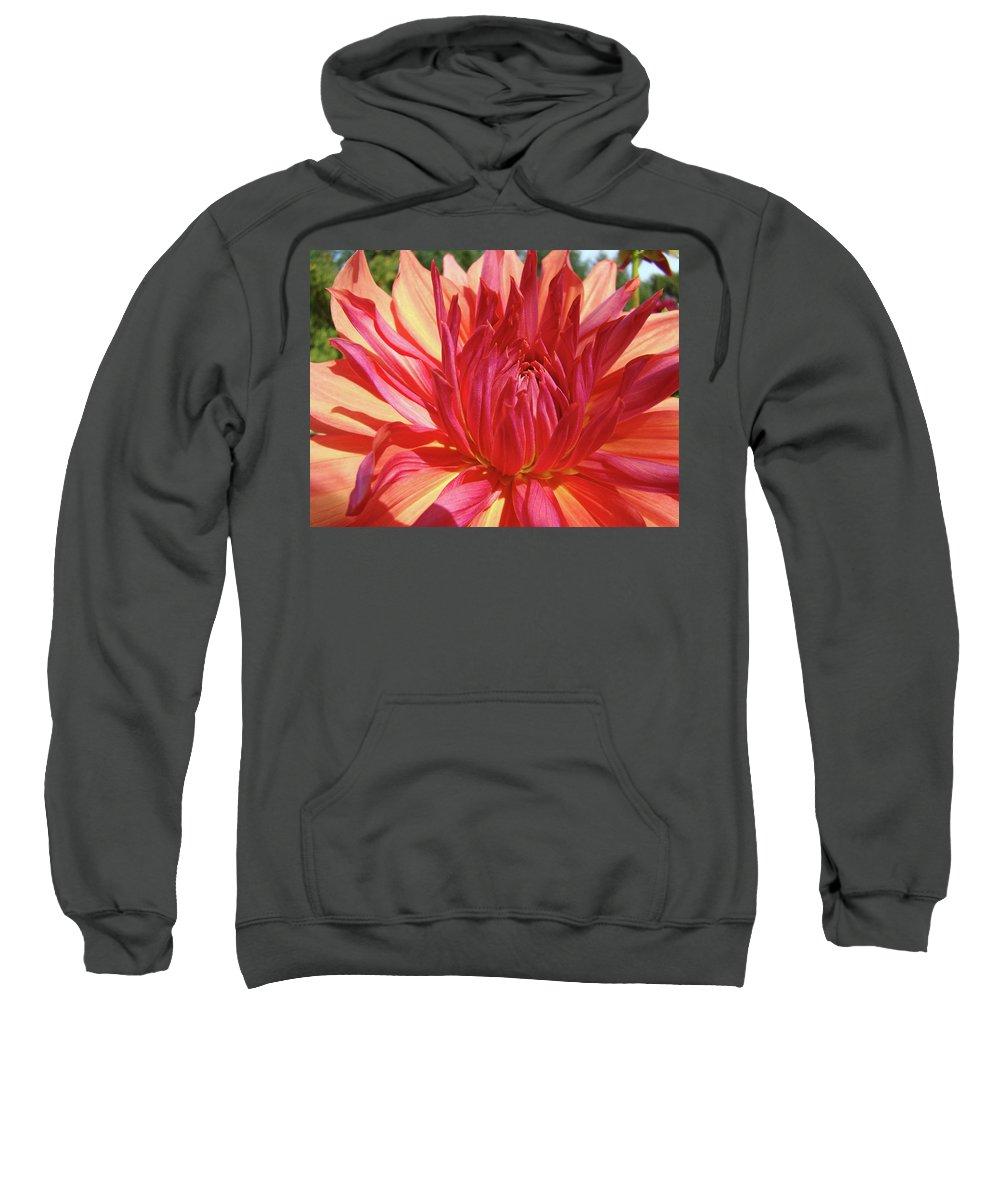 Dahlia Sweatshirt featuring the photograph Dinner Plate Dahlia Flower Art Print Orange Baslee Troutman by Baslee Troutman