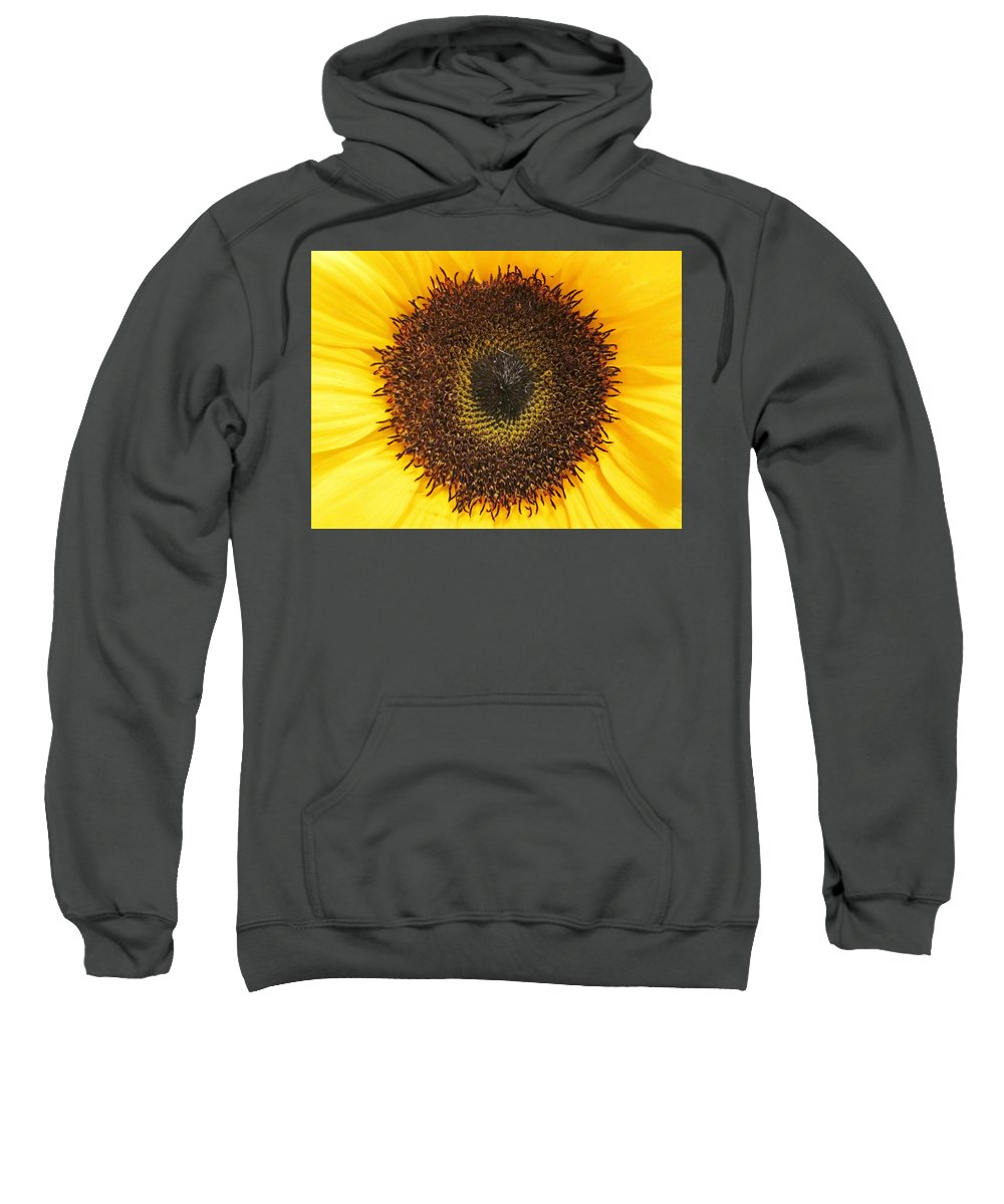 Daisy Sweatshirt featuring the photograph Disc Florets by Rosita Larsson