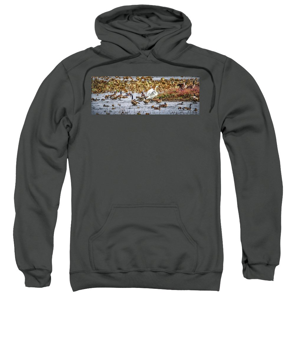 Waterfowl Sweatshirt featuring the photograph Diversity by Ray Congrove