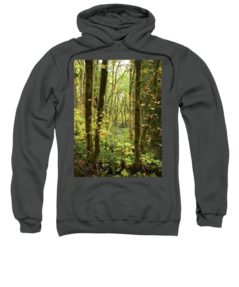 Woods Sweatshirt featuring the photograph Dixie by Sara Stevenson