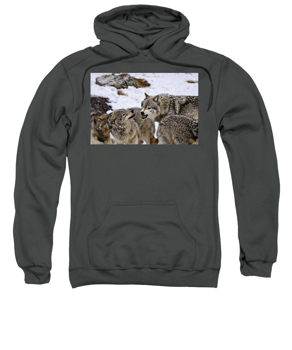 Michael Cummings Sweatshirt featuring the photograph Do I Have Your Attention Now by Michael Cummings