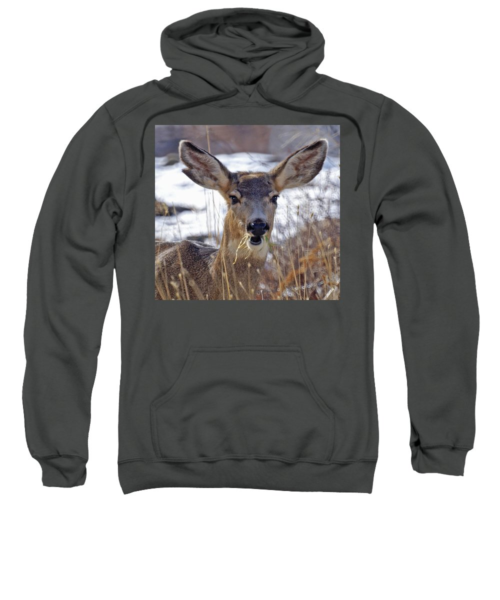 Doe Sweatshirt featuring the photograph Doe by Heather Coen