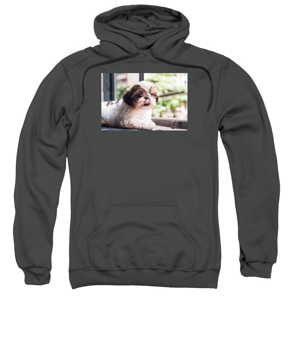 Book Sweatshirt featuring the photograph Dog 1 by Rossana Magri