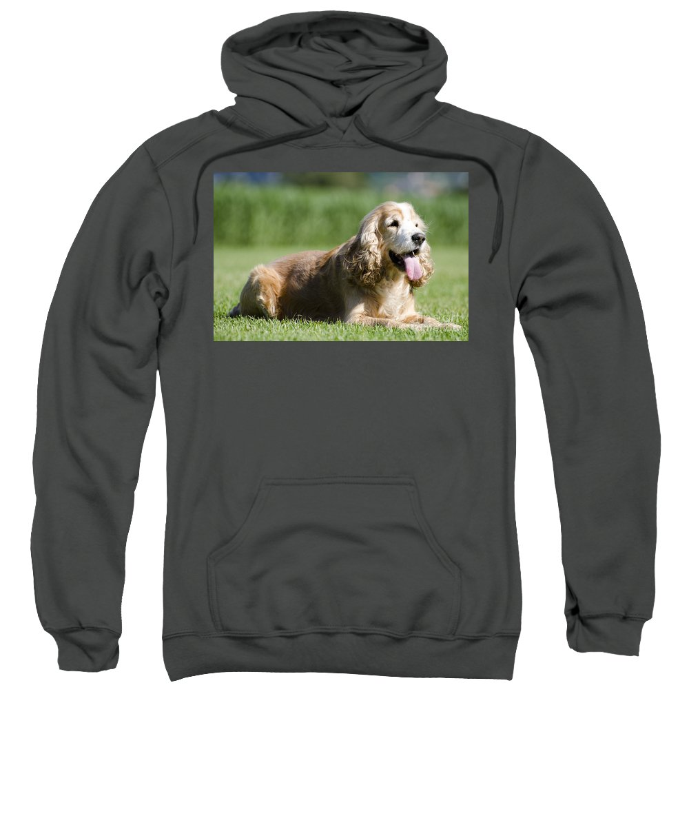 Dog Sweatshirt featuring the photograph Dog Lying Down On The Green Grass by Mats Silvan