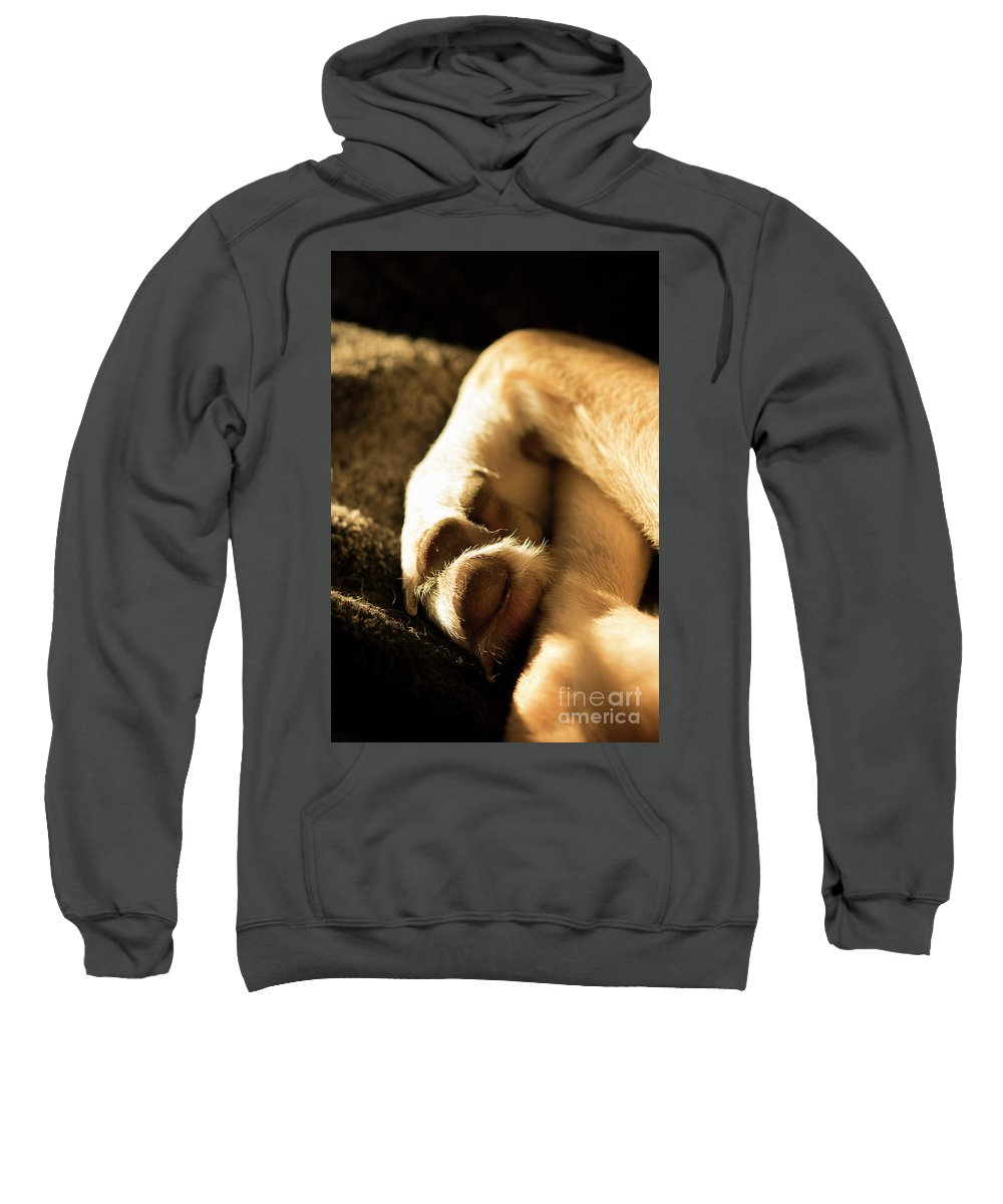 Dog Sweatshirt featuring the photograph Dogs Paws by Michelle Himes