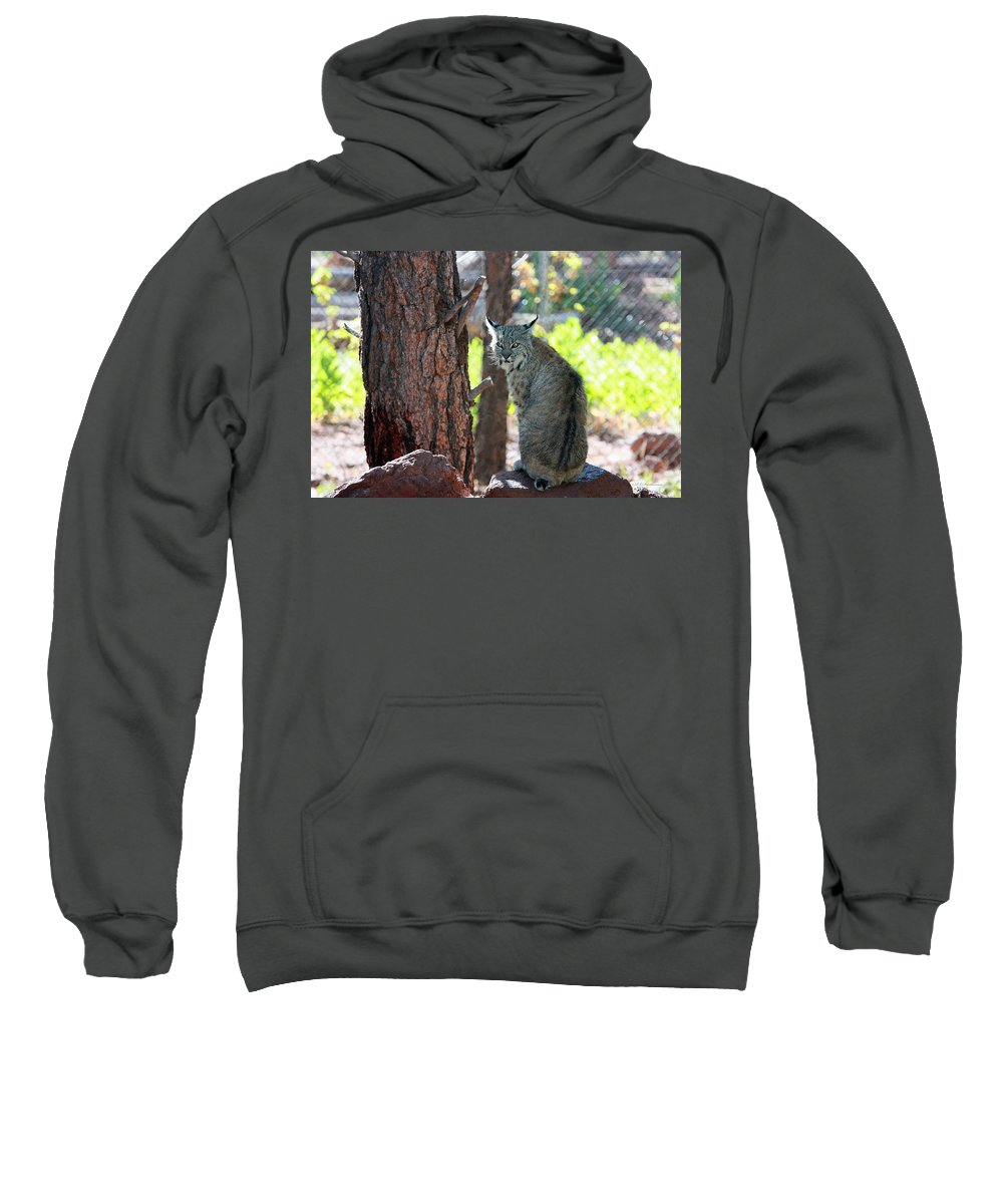 Bobcat Sweatshirt featuring the photograph Don't Bother Me by Robert Smitherman