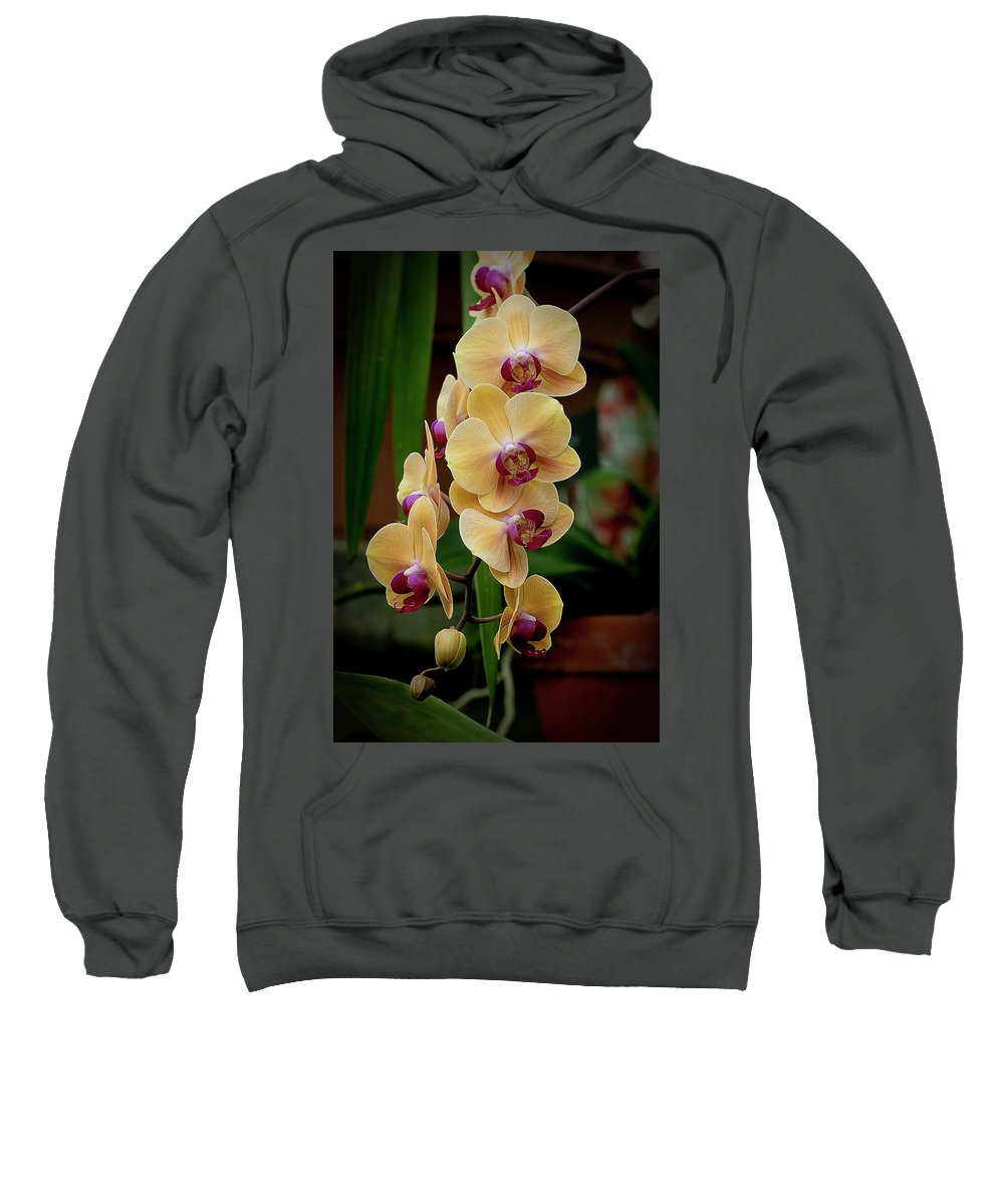 Orchids Sweatshirt featuring the photograph Doritaenopsis Golden Beauty by Michael Cummings