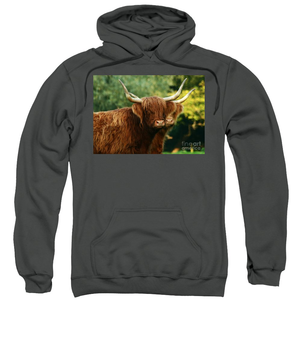 Cow Sweatshirt featuring the photograph Double Horny Portrait by Angel Ciesniarska
