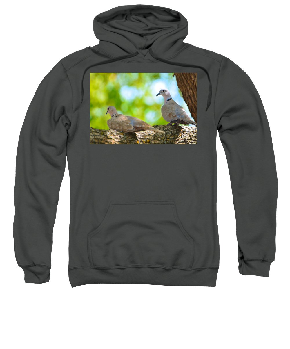 Doves Sweatshirt featuring the photograph Doves In A Tree by Josephine Buschman