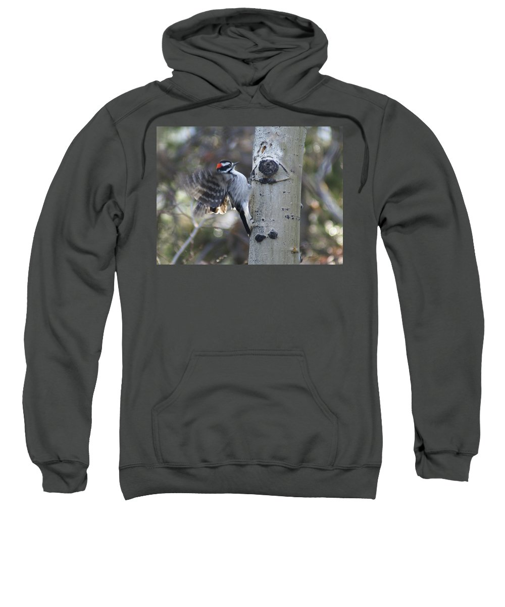 Woodpecker Sweatshirt featuring the photograph Downy Woodpecker by Heather Coen