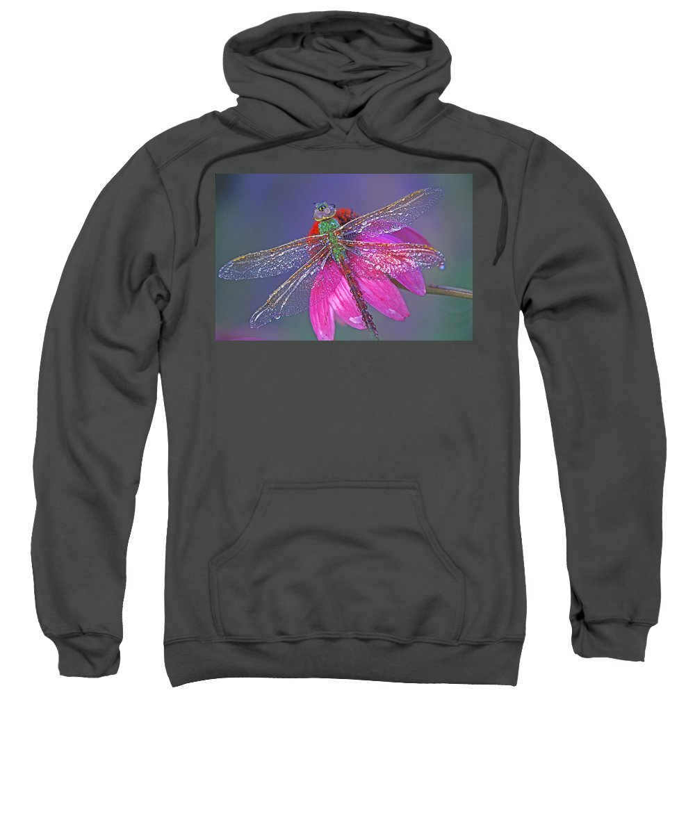Dew Covered Dragonfly Rests On Purple Cone Flower Sweatshirt featuring the photograph Dreaming Dragon by Bill Morgenstern