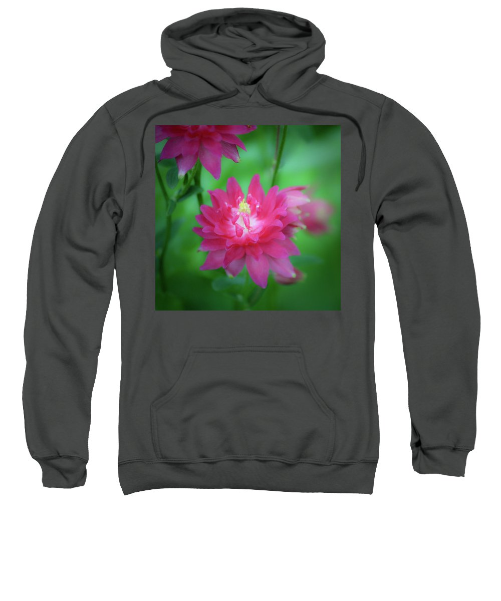 Aquilegia Sweatshirt featuring the photograph Dreamy Hot Pink Columbine Squared by Teresa Mucha