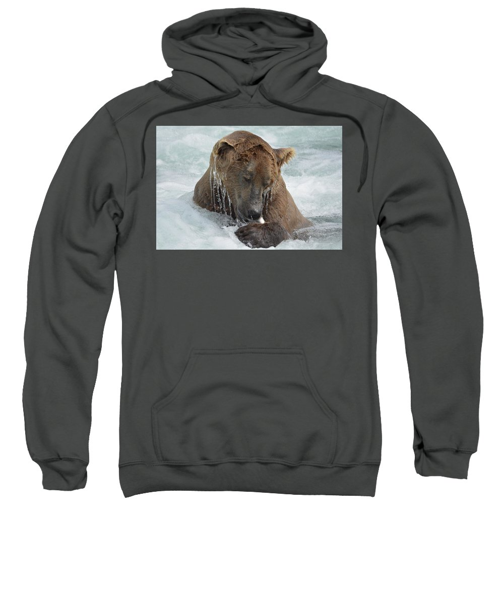 Dripping Sweatshirt featuring the photograph Dripping Grizzly Bear by Patricia Twardzik
