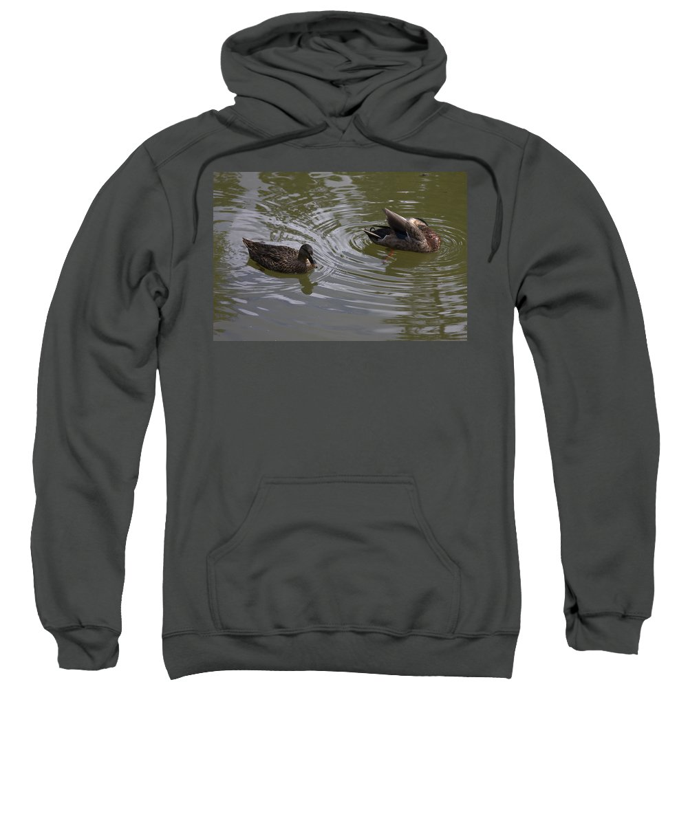 Duck Pair Swimming Sweatshirt featuring the photograph Duck Pair by Sally Weigand