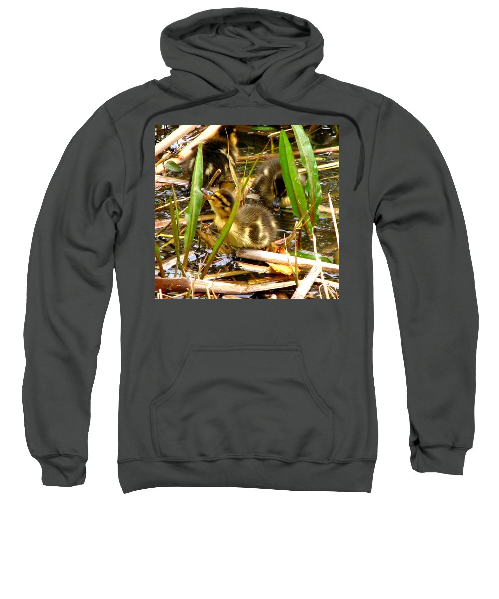 Duck Sweatshirt featuring the photograph Ducklings 1 by J M Farris Photography
