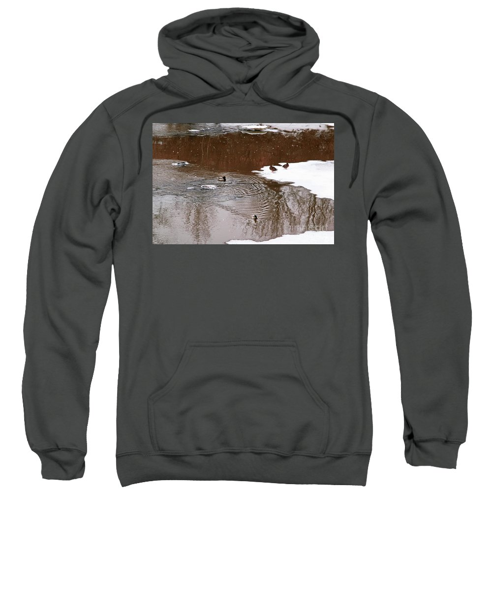 Duck Sweatshirt featuring the photograph Ducks 2 by Esko Lindell