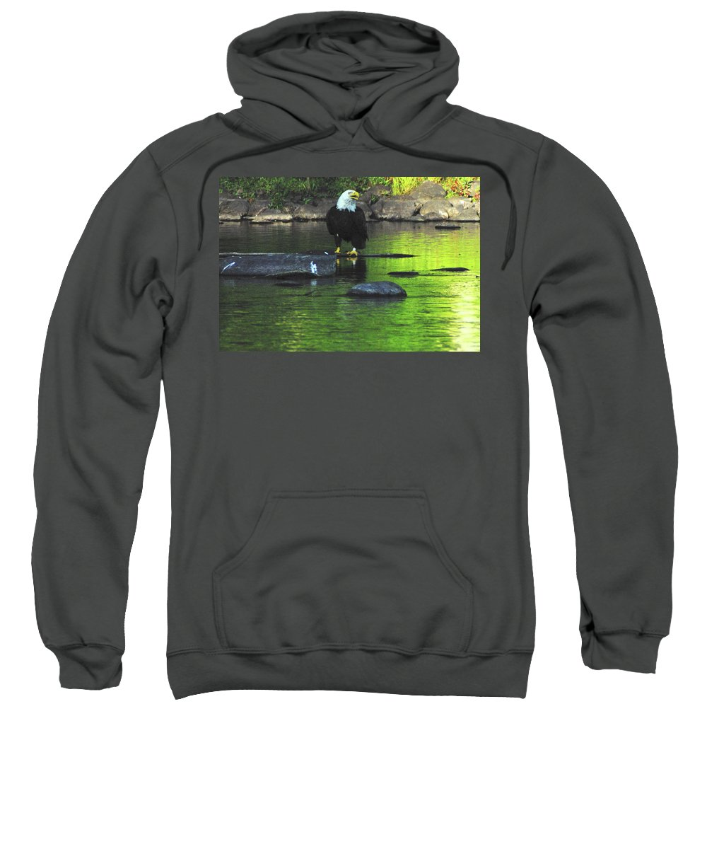 Eagle Sweatshirt featuring the photograph Eagle On River Rock IIi by Alice Markham