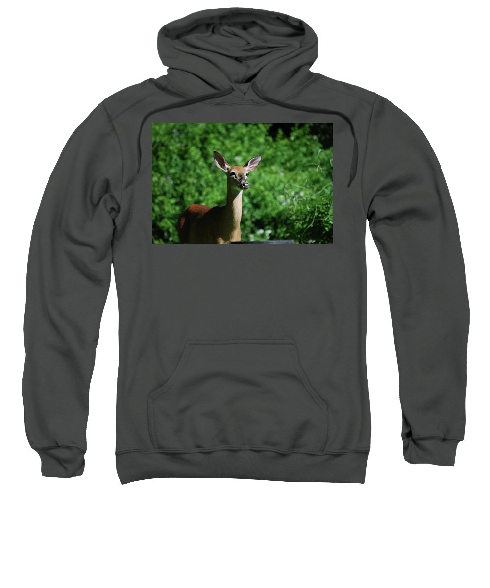 Deer Sweatshirt featuring the photograph Ears by Lori Tambakis