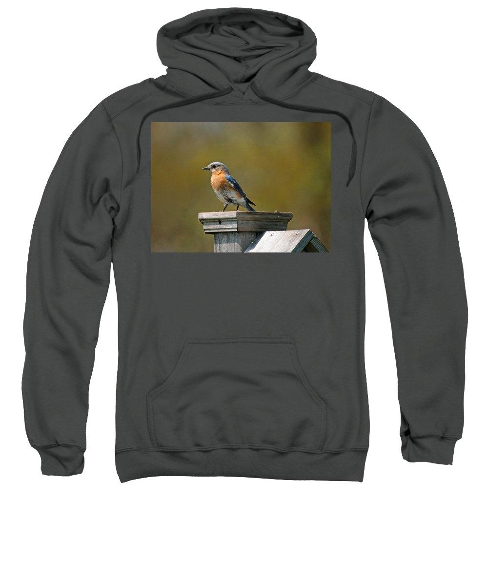 Blue Bird Sweatshirt featuring the photograph Eastern Blue Bird by Robert Pearson