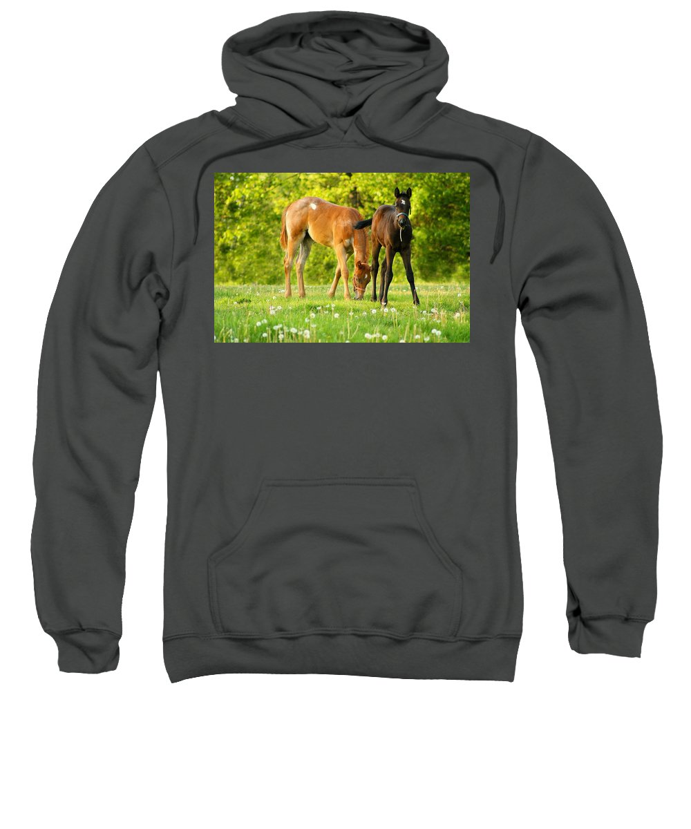 Pasture Sweatshirt featuring the photograph Easy Pickins by Angela Rath