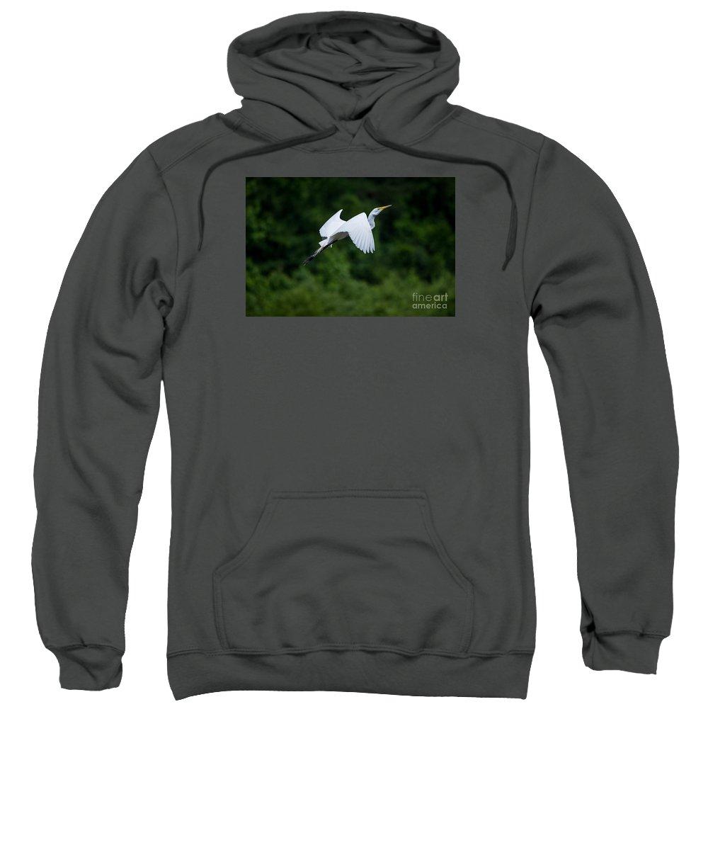 Bird Sweatshirt featuring the photograph Egret Rising II by Torrance Pollard
