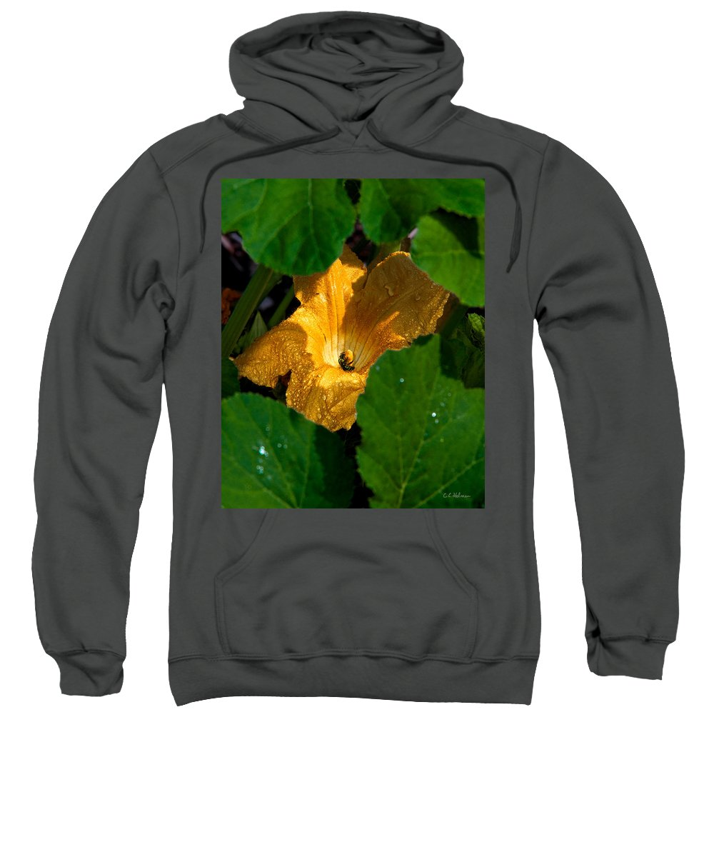 Squash Sweatshirt featuring the photograph Eldorado For Bees by Christopher Holmes