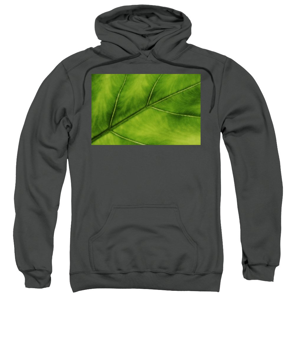 Leaf Sweatshirt featuring the photograph Elephant Ear by Marilyn Hunt