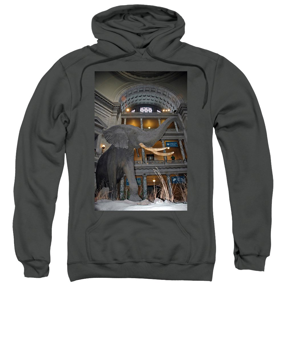 Usa Sweatshirt featuring the photograph Elephant In The Room by LeeAnn McLaneGoetz McLaneGoetzStudioLLCcom