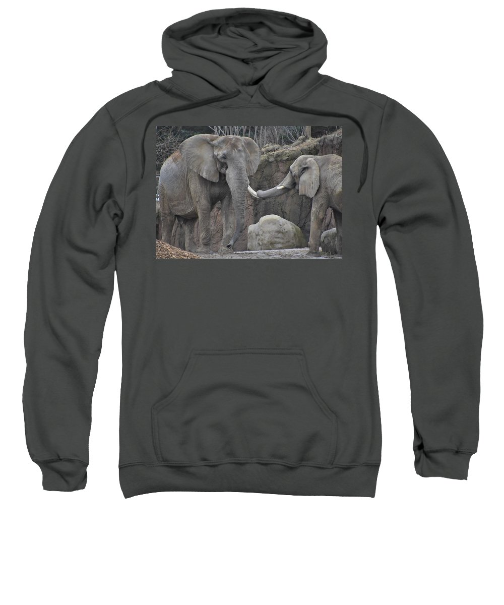 Elephant Sweatshirt featuring the photograph Elephants Playing 3 by Flo McKinley