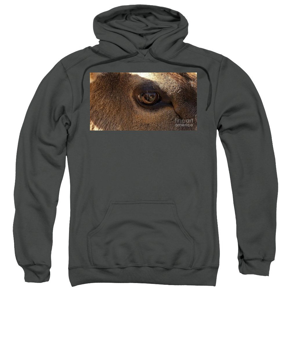 Elk Eye Close Up Sweatshirt featuring the photograph Elk Eye Close Up by Jane Butera Borgardt