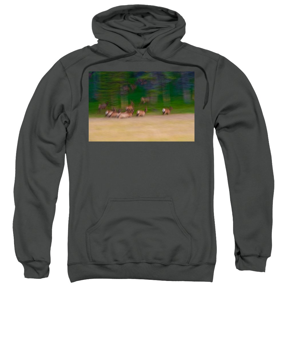 Yellowstone Sweatshirt featuring the photograph Elk On The Run by Sebastian Musial
