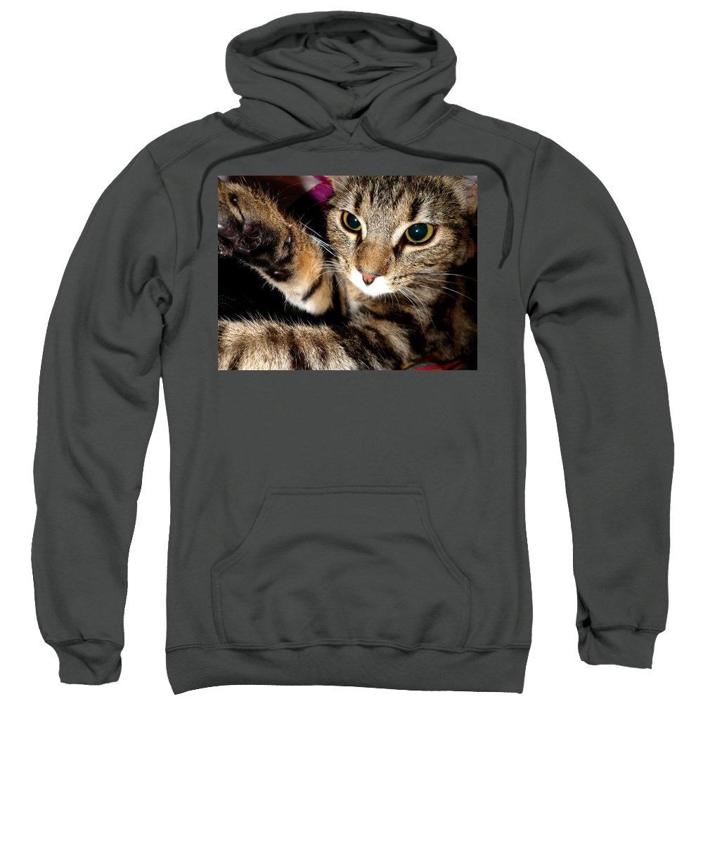 Cat Sweatshirt featuring the photograph Ellie Cat by Dianne Pettingell