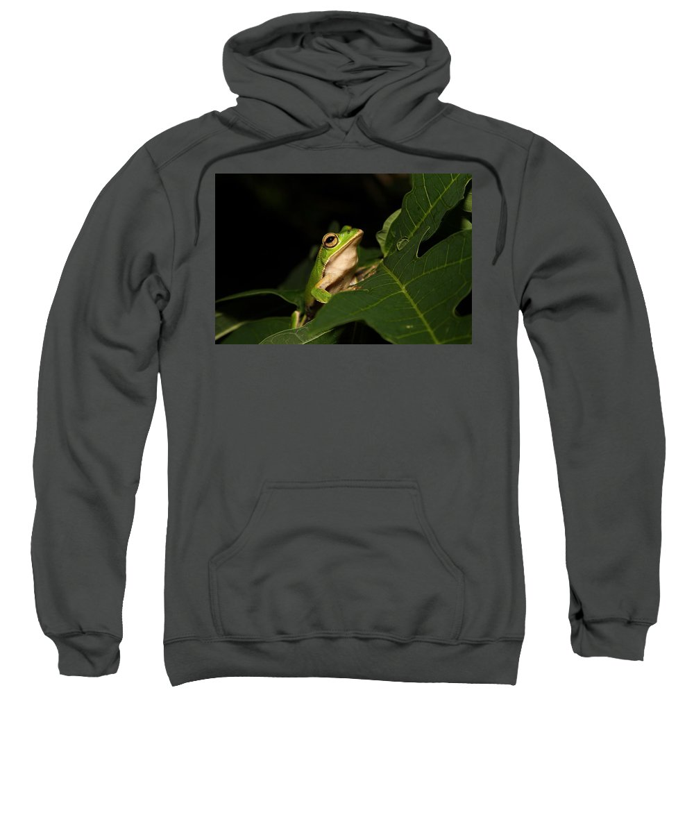 Frog Sweatshirt featuring the photograph Emerald Eye Tree Frog by FL collection