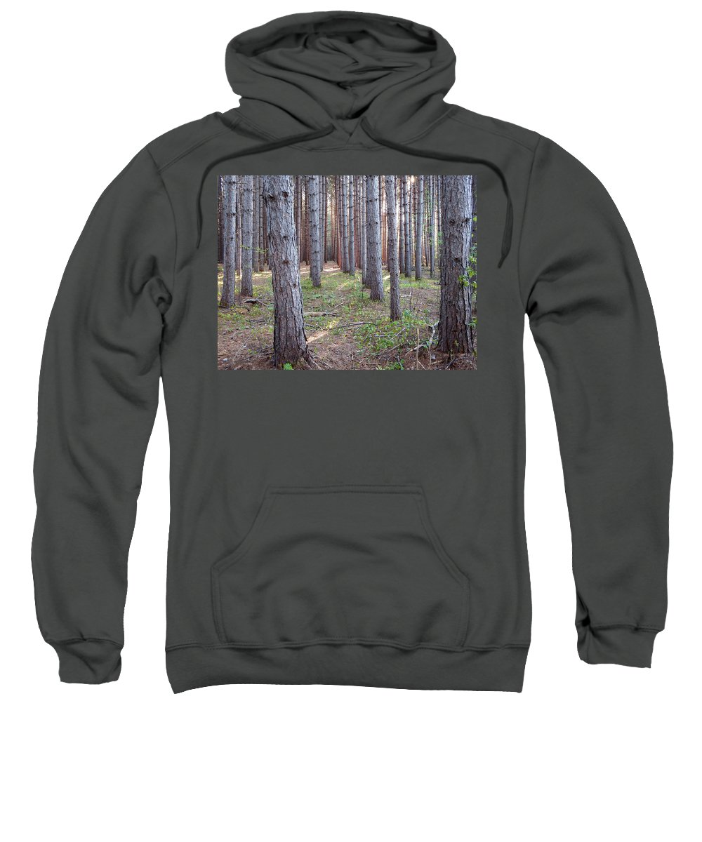 Woods Sweatshirt featuring the photograph Enchanted Forest by Alison Gimpel