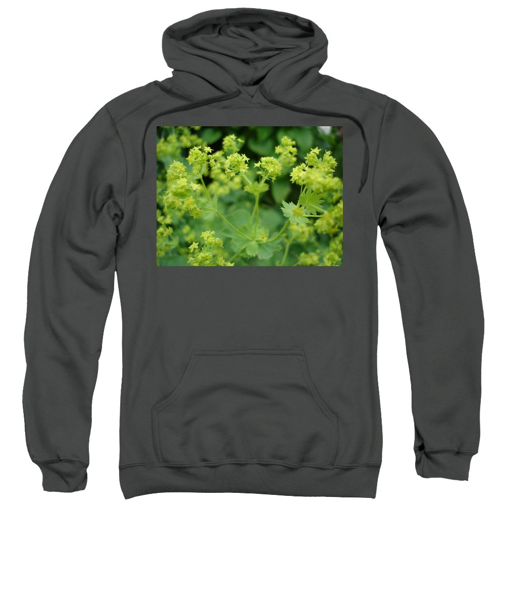 Plant Sweatshirt featuring the photograph English Ladys Mantle by Susan Baker