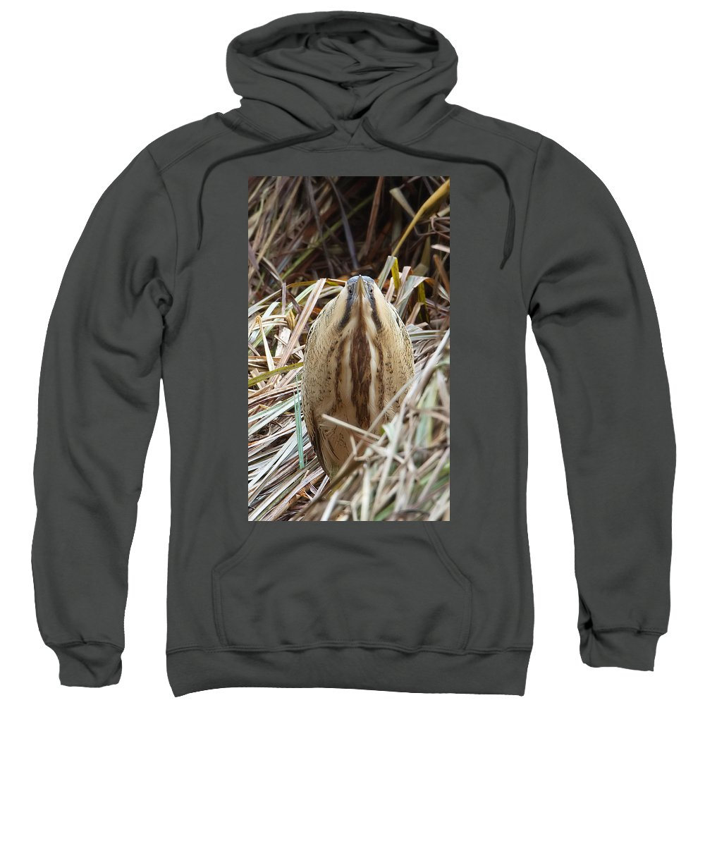 Bittern Sweatshirt featuring the photograph European Bittern by Bob Kemp