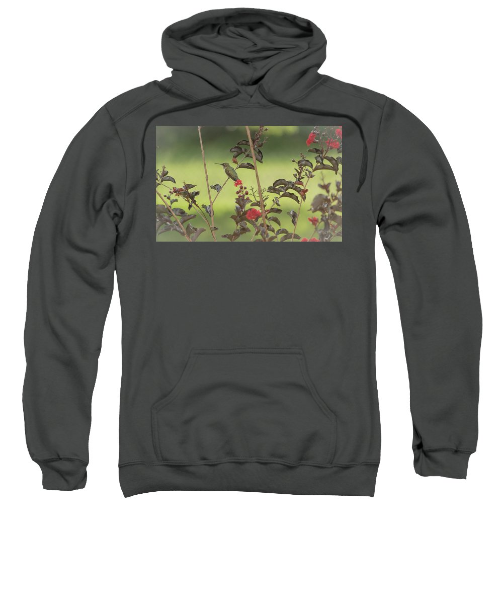 Hummingbird Sweatshirt featuring the photograph Evening Rest by Donna Collins
