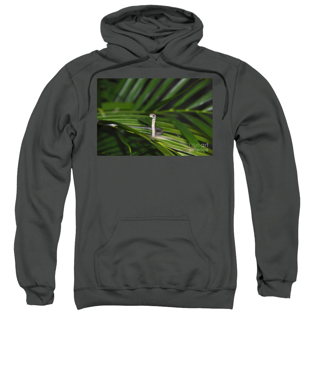 Everglades Racer Sweatshirt featuring the photograph Everglades Racer by David Lee Thompson