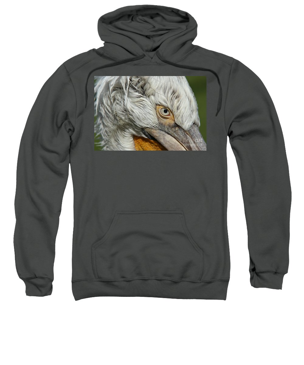 Dalmatian Pelican Sweatshirt featuring the photograph Eye by Michal Boubin