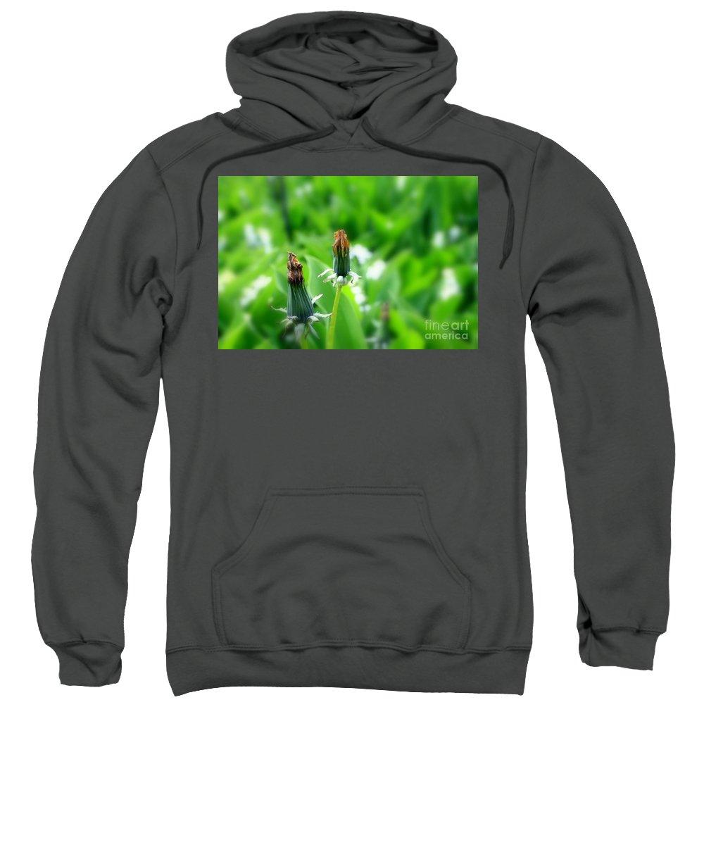 Dandelion Sweatshirt featuring the photograph Faded by Steve K