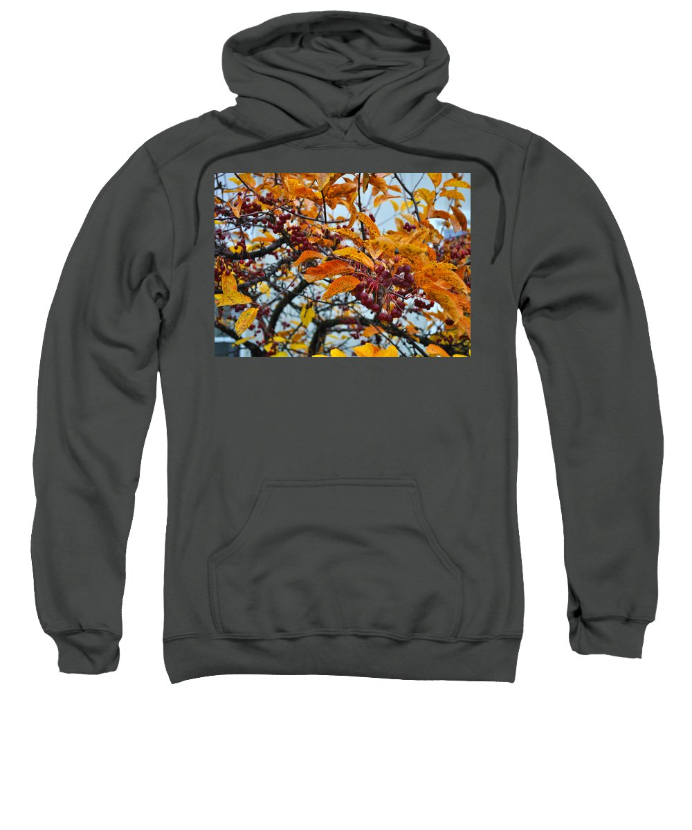 Berries Sweatshirt featuring the photograph Fall Berries by Tim Nyberg
