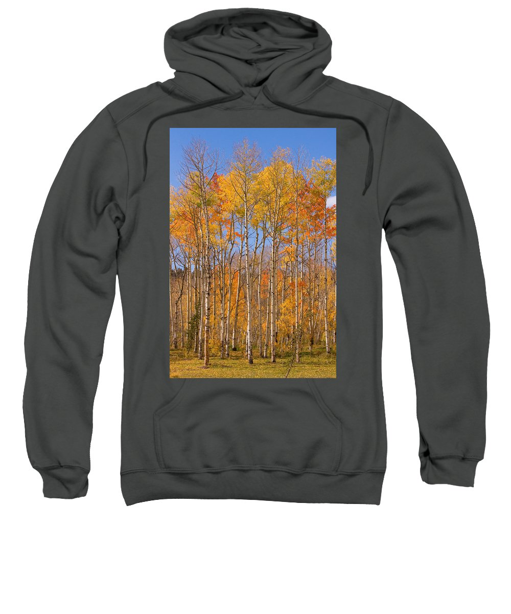 Trees Sweatshirt featuring the photograph Fall Foliage Color Vertical Image by James BO Insogna