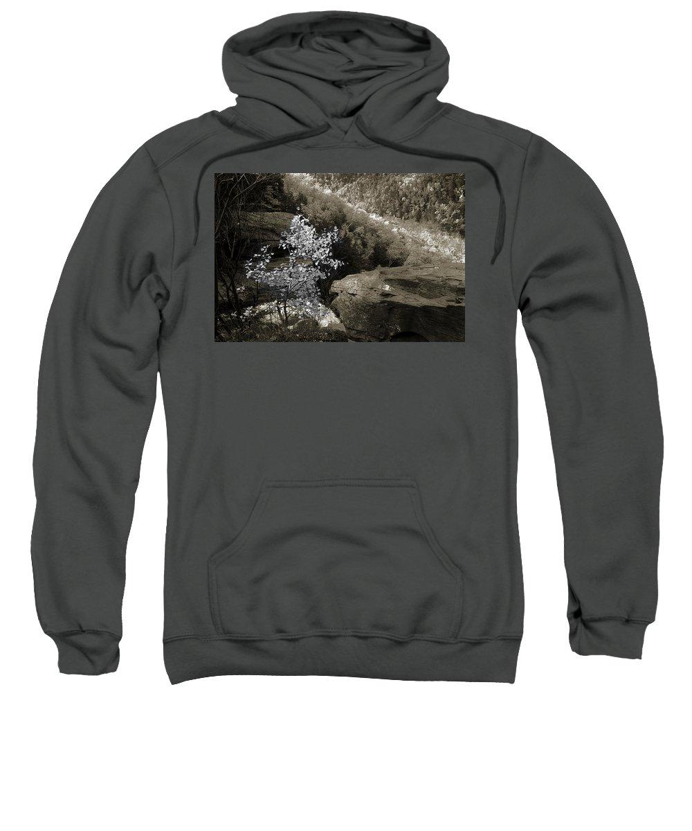 Nature Sweatshirt featuring the photograph Fall Foliage by Yuri Lev