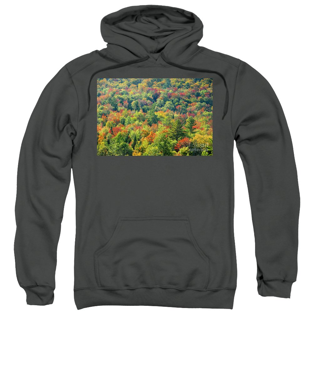 Adirondack Mountains Sweatshirt featuring the photograph Fall Forest by David Lee Thompson