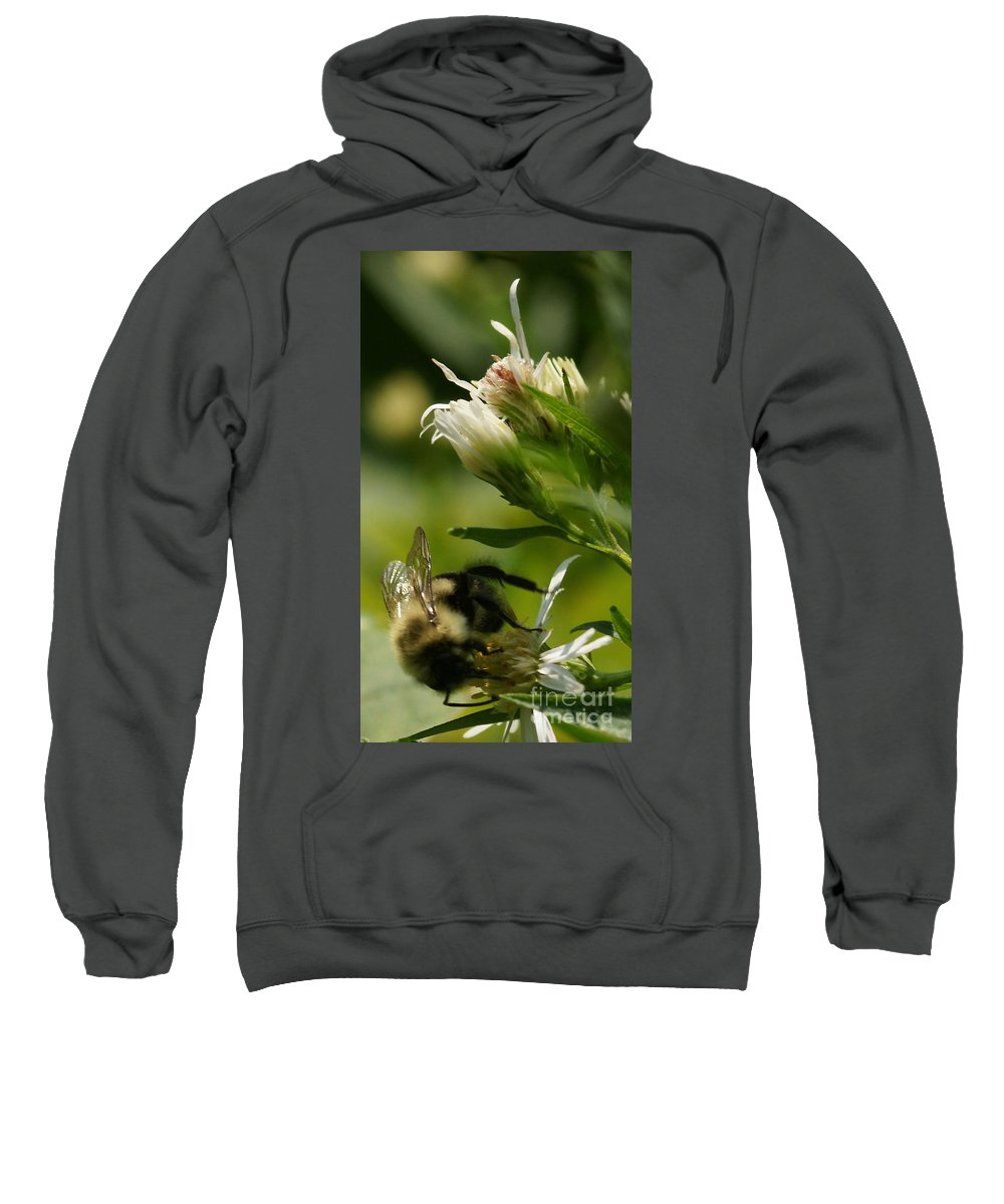 Aster Sweatshirt featuring the photograph Fall Gathering by Linda Shafer