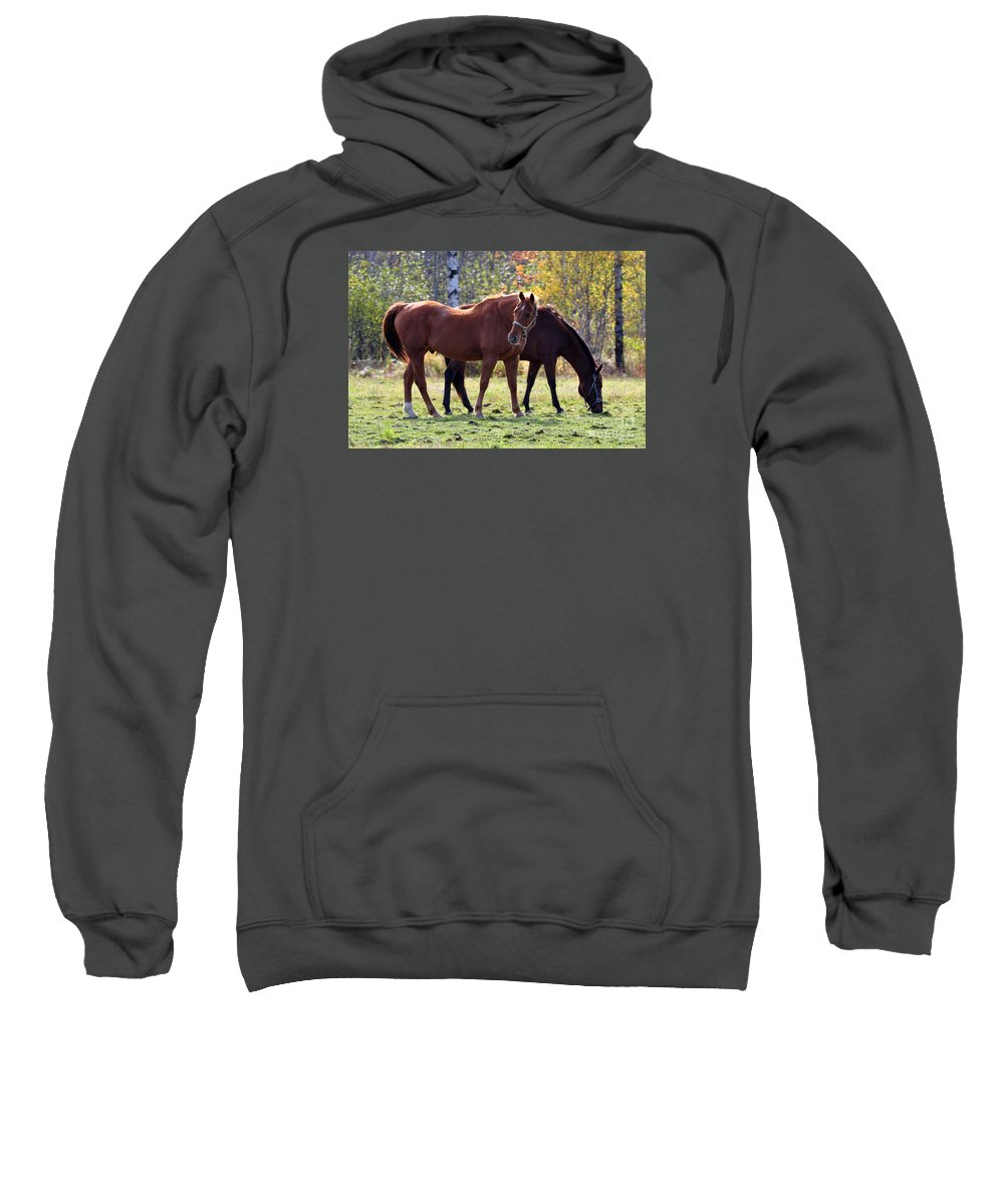 Horse Sweatshirt featuring the photograph Horses Fall Grazing by Glenn Gordon