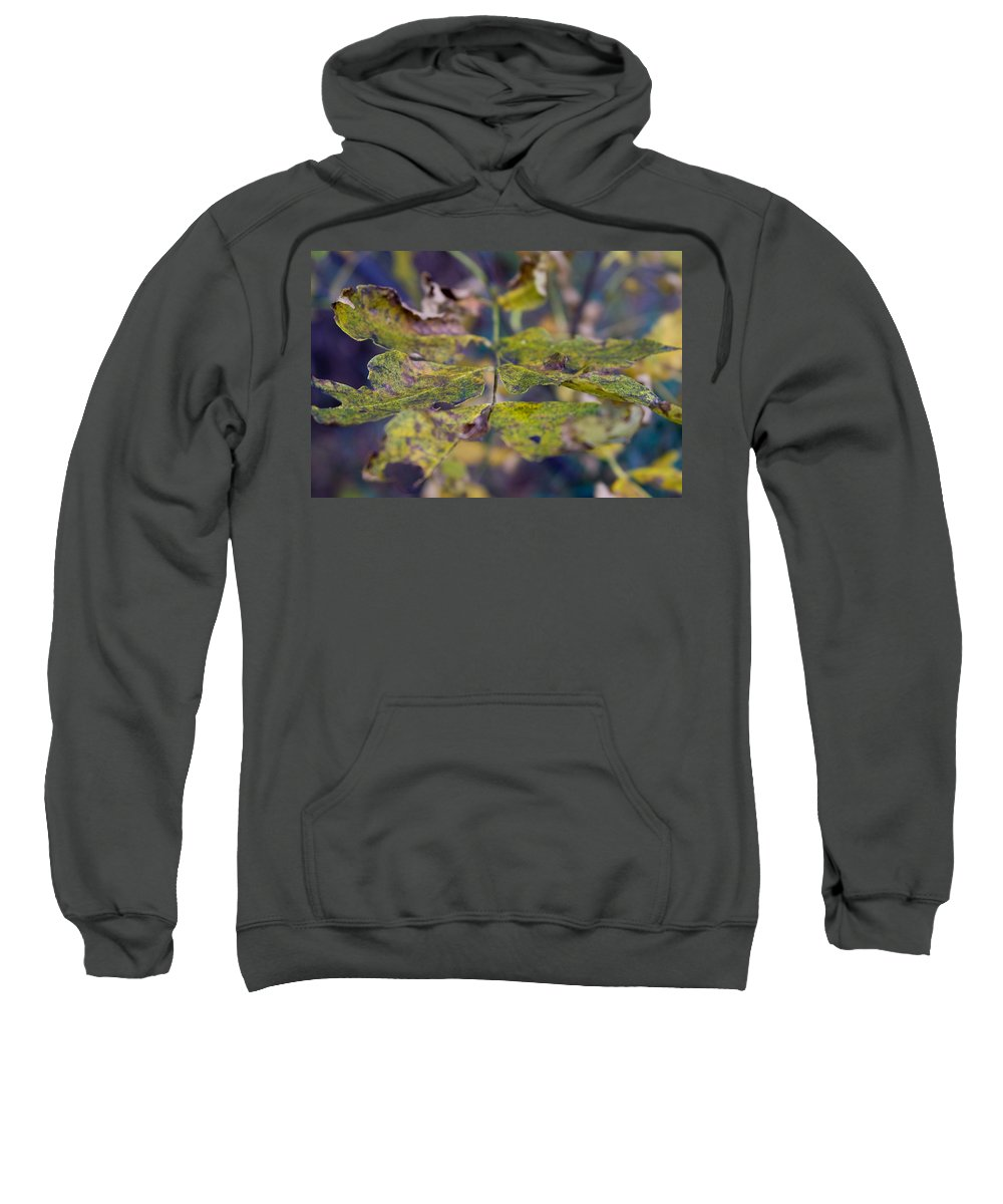 Leaves Sweatshirt featuring the photograph Fall Leaves by Bob Mintie