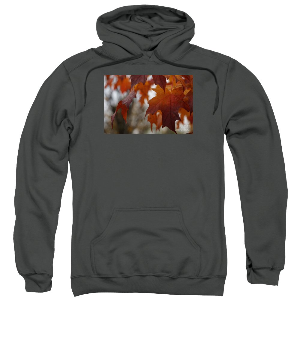 Autumn Sweatshirt featuring the photograph Fall by Linda Shafer