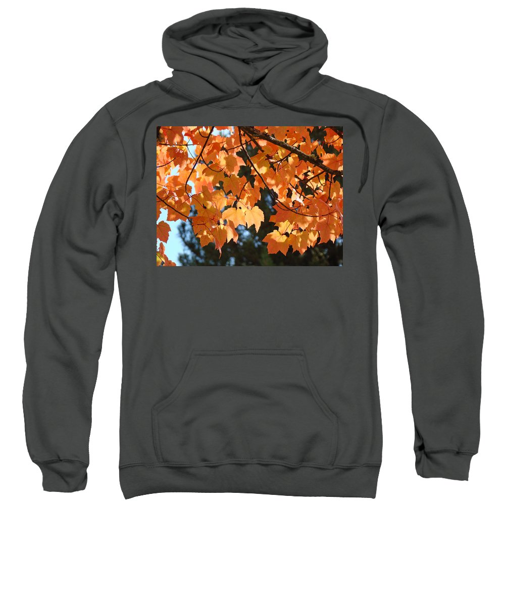 Landscape Sweatshirt featuring the photograph Fall Tree Art Prints Orange Autumn Leaves Baslee Troutman by Baslee Troutman