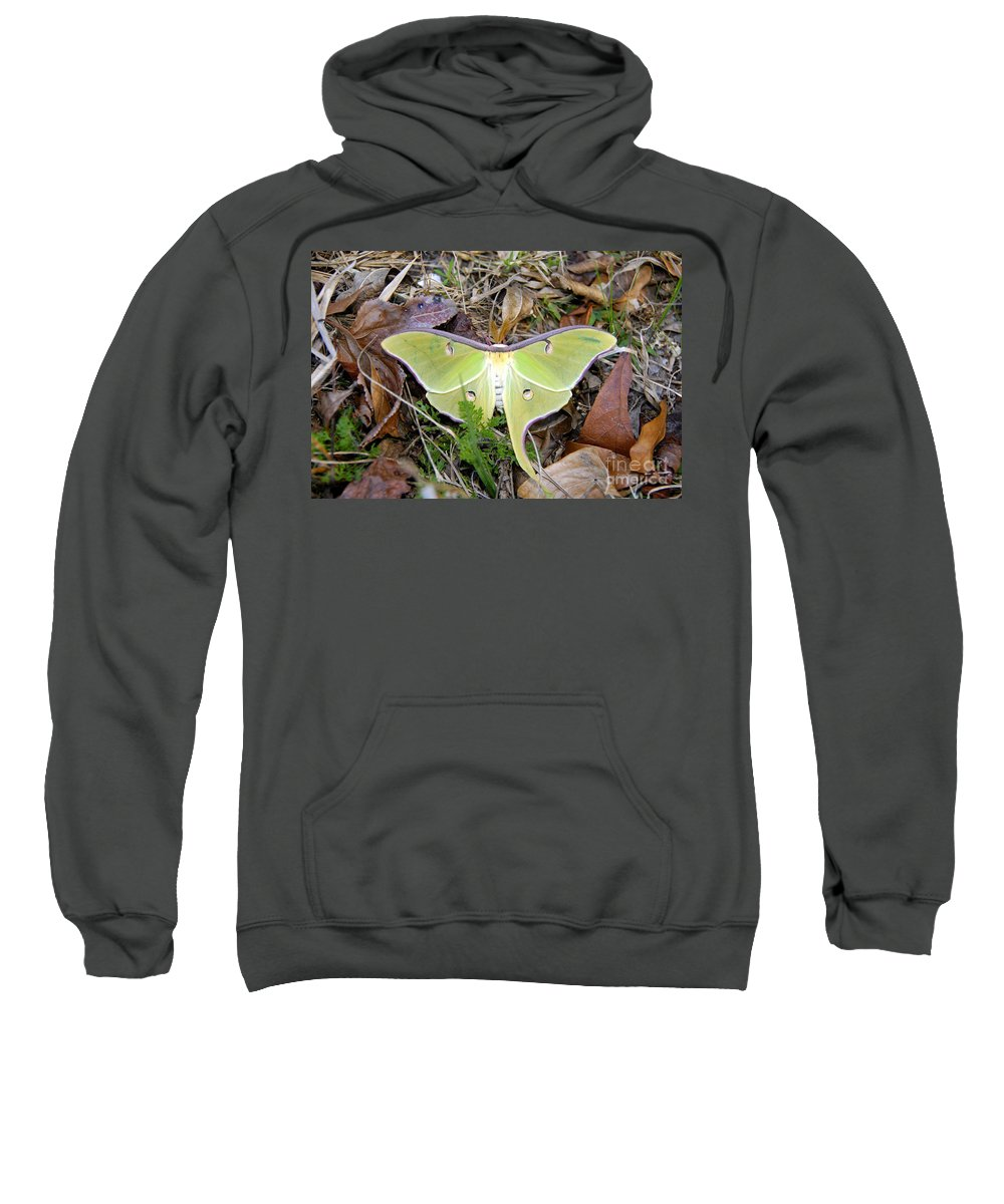 Moth Sweatshirt featuring the photograph Fallen Angel by David Lee Thompson